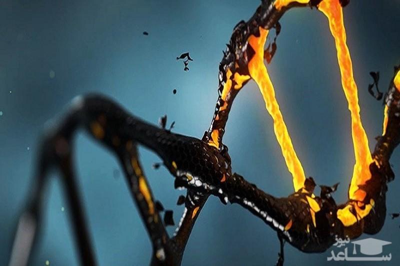 نقش زباله ژنتیکی در بقای ژنوم انسانی!