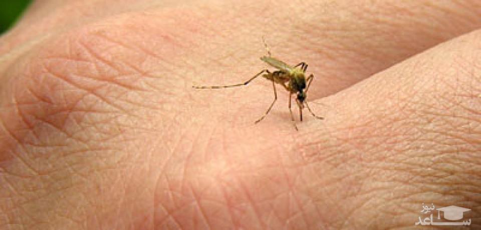 ساخت لوسیون خانگی برای دفع پشه و حشرات