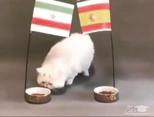 (فیلم) پیشگویی یک گربه برای بازی ایران - اسپانیا