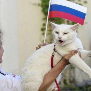 (فیلم) گربه ای که جام جهانی را پیش گویی میکند!