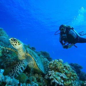 آشنایی با رشته زیست شناسی دریا و بازار کار آن
