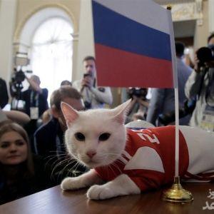گربه روس نتیجه بازی ایران - مراکش را پیشگویی کرد
