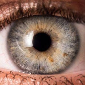 تاری چشم هشداری برای بیماری شبکیه چشم!