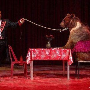 (فیلم) حمله خرس به یک مرد در سیرک