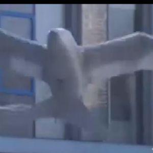 (فیلم) ربات های جاسوس پرنده نما در آسمان!