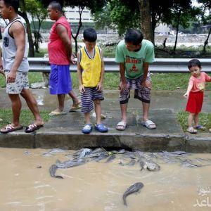 (عکس) هجوم ماهی ها به شهر در اثر سیل