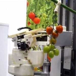 برداشت محصولات کشاورزی با رباط