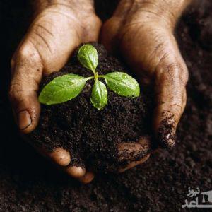 آشنایی با رشته کشاورزی - زراعت و اصلاح نباتات و بازار کار آن