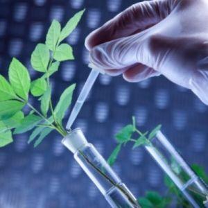 آشنایی با رشته بیوتکنولوژی کشاورزی و بازار کار آن
