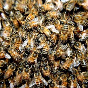 (فیلم) طوفان حمله زنبورها به آتش نشان ها در غرب تهران
