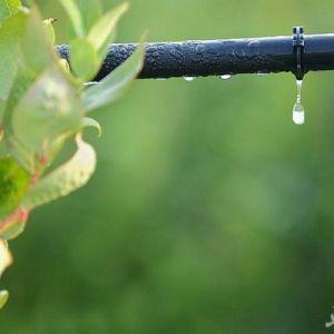 صرفه جویی در مصرف آب با اصلاح یک ژن گیاهی