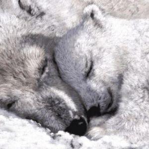 چرا حیوانات موقع خواب زمستانی از گرسنگی نمی میرند؟