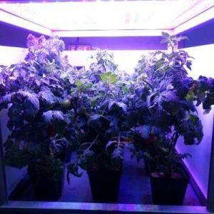 آیا ناسا موفق به پرورش گیاه در فضا خواهد بود؟!