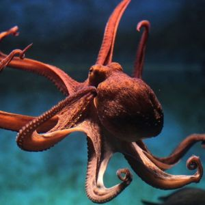 عجیب ترین حیوان کره زمین!