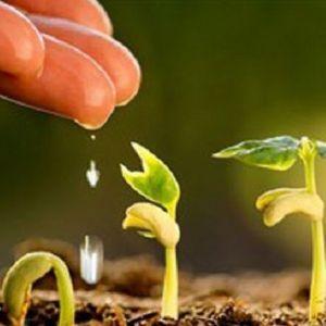 آشنایی با مجموعه علوم و مهندسی باغبانی و بازار کار آن