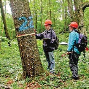 منابع و دروس رشته علوم و مهندسی جنگل و ضرایب آن در مقطع کارشناسی ارشد