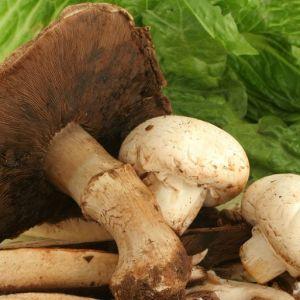 (فیلم) قارچ سمی را چگونه بشناسیم؟