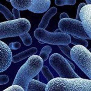 (فیلم)چگونه سلولهای ایمنی بدن باکتری میخورند ؟