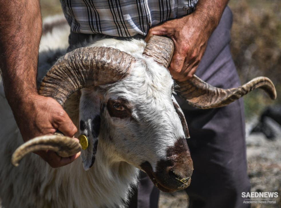 Eid al-Adha in Turkey: Offering Countless Sacrifices in the Name of Abraham
