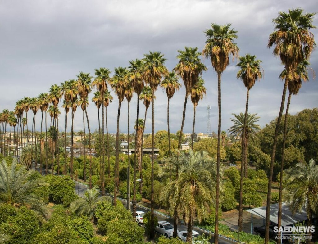 Jiroft the City of Palm Trees and Fresh Citrus