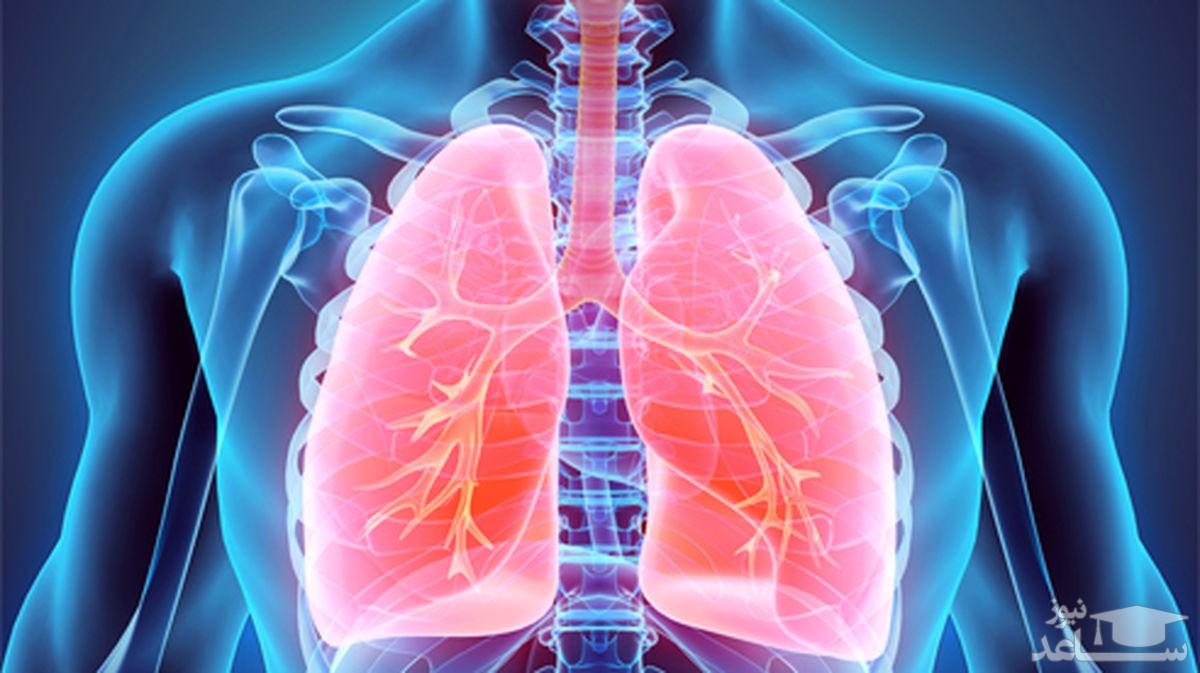 اینفوگرافیک / چند خوراکی مفید برای تقویت ریهها