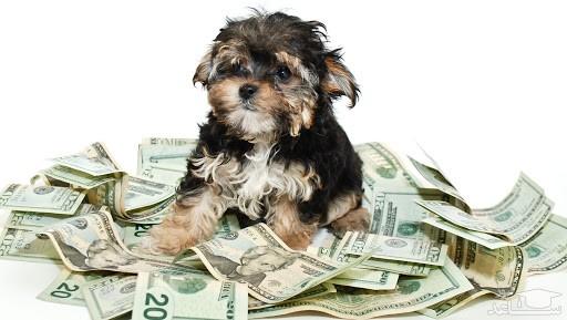 هزینه نگهداری سگ