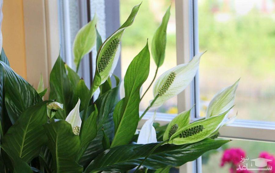 آشنایی با گیاهان آفتاب دوست
