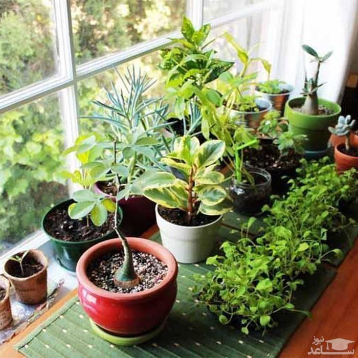 فواید نگهداری گل و گیاه در خانه