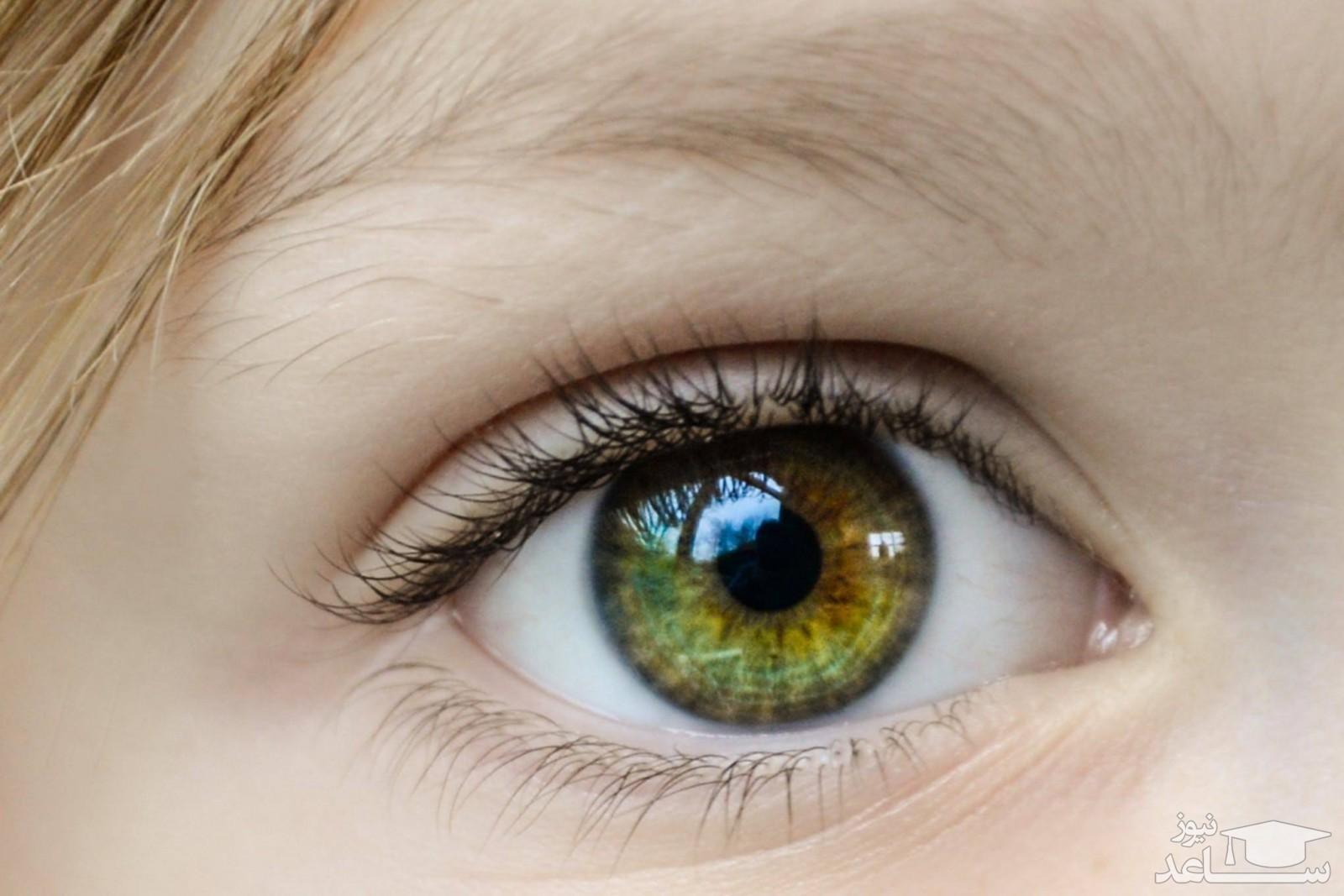 (عکس) چشم انسان از نمای نزدیک