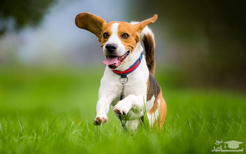 آموزش فرمان بیا به سگ ها
