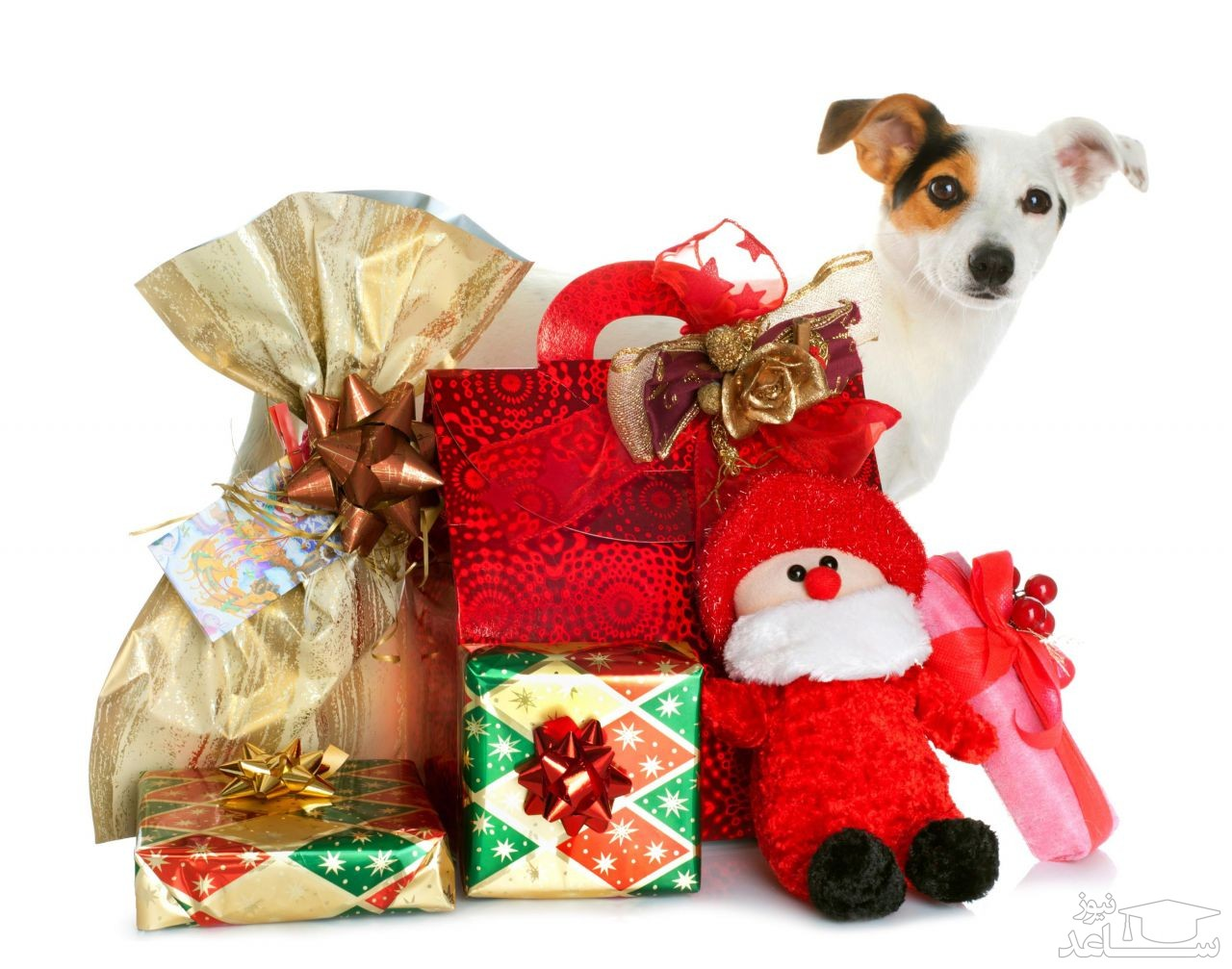 باید و نبایدهای هدیه دادن سگ به دیگران