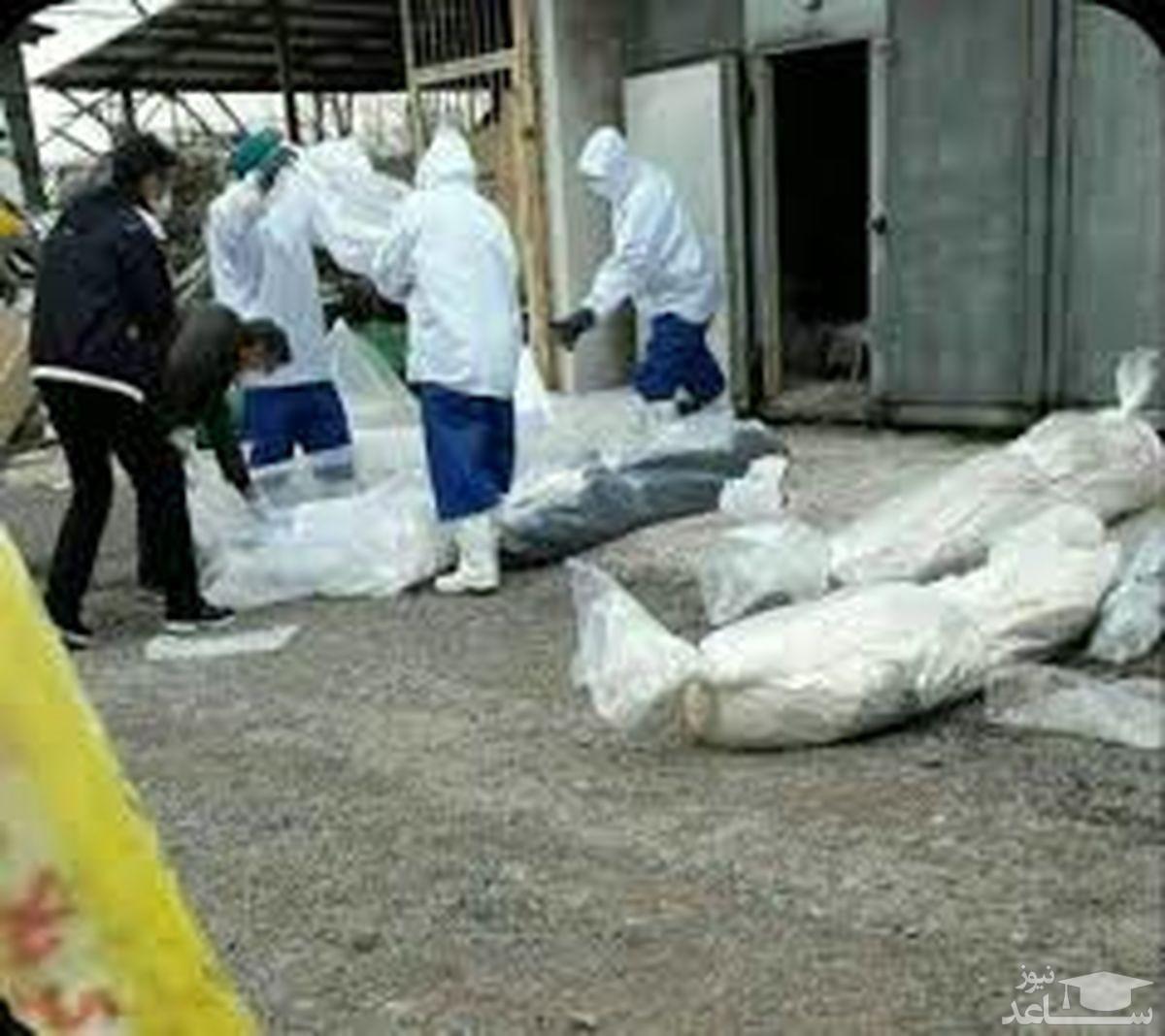 """تعداد قربانیان """"کرونا"""" در کرمانشاه به 849 نفر رسید"""