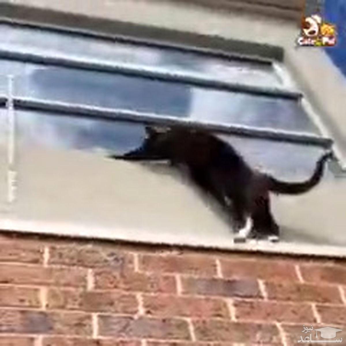 ویدئو جالب از گربههای کماندو