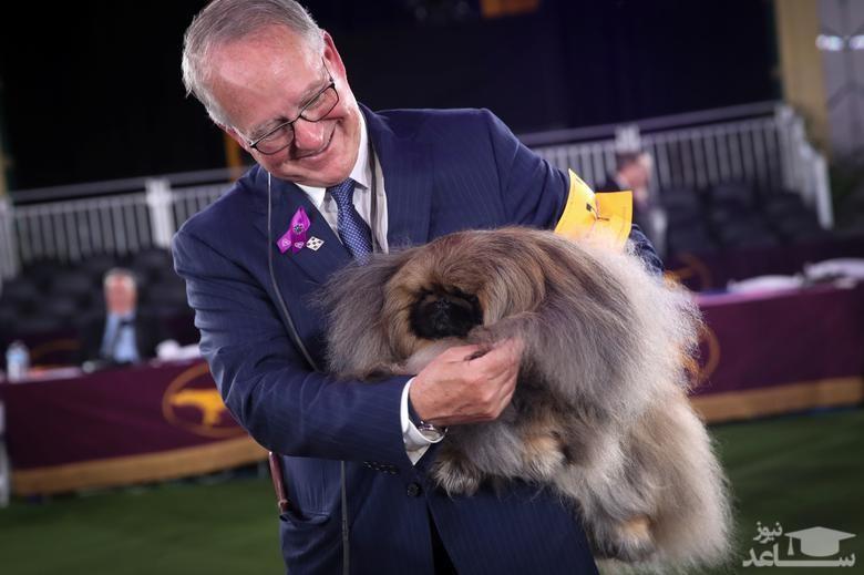 برنده مسابقه سالانه بهترین سگ خانگی در شهر نیویورک آمریکا