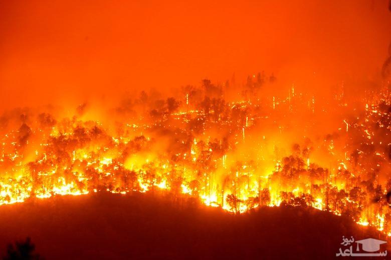 نجات اسب ها از مناطق آتش گرفته در جنگل های ایالت کالیفرنیا آمریکا/ رویترز