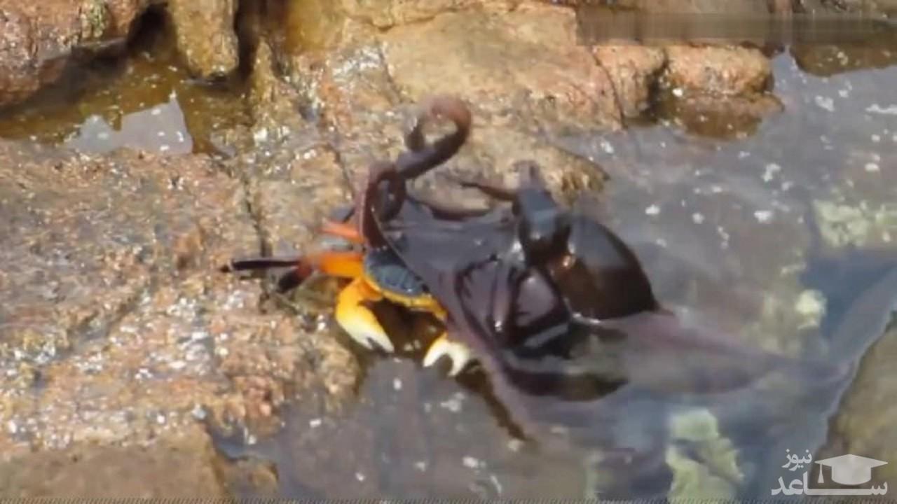 شکار شدن یک خرچنگ توسط اختاپوس !