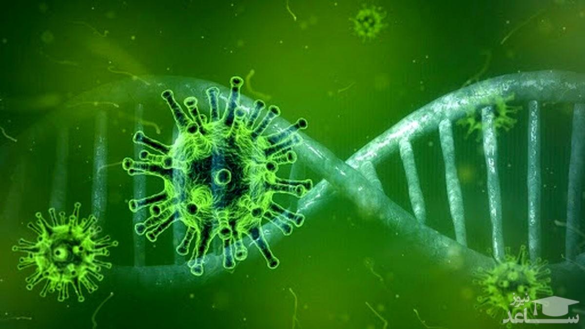 شناسایی ۱۷۳ مورد جدید مبتلا به کرونا ویروس در ایلام