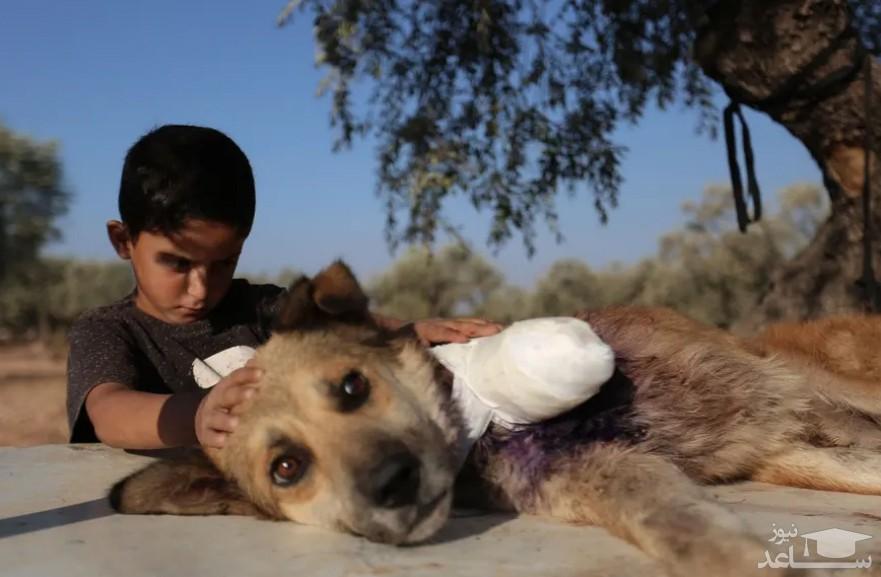 مراقبت یک کودک سوری از یک سگ قطع عضو شده در ادلب سوریه/ خبرگزاری فرانسه