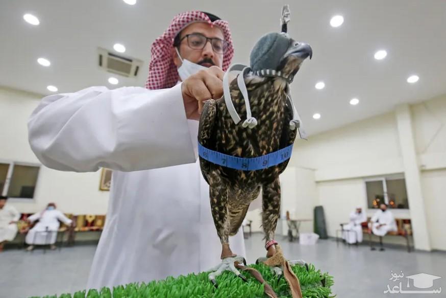 حراجی فروش شاهین شکاری در کویت/ خبرگزاری فرانسه