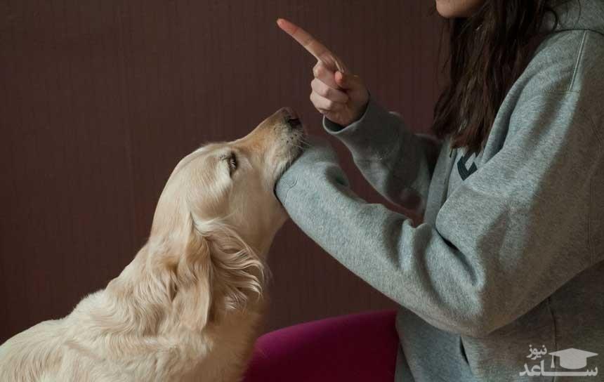 چه کنیم تا سگمان دیگران را گاز نگیرد؟