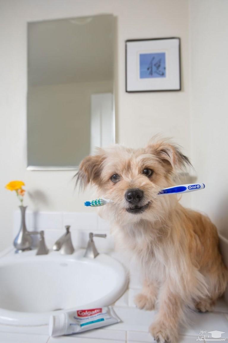 مراقبت از دندان ها و لثه های سگ و گربه