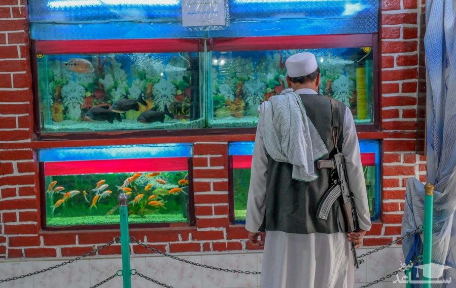 یک نیروی طالبان در آکواریوم باغ وحش شهر کابل