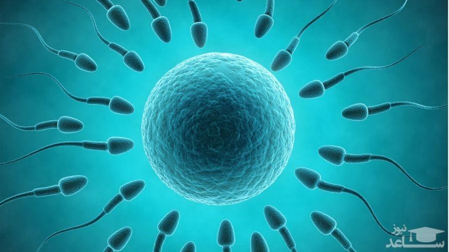 داروهای گیاهی برای افزایش کیفیت اسپرم
