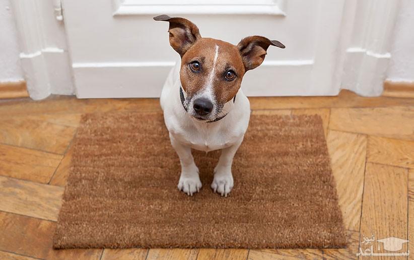 علل و علائم ترس در سگ ها