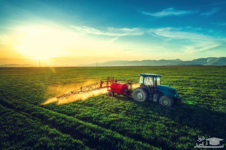 تولید محصولات کشاورزی غولپیکر/ تصاویر
