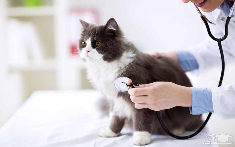 توکسوپلاسموز در گربه