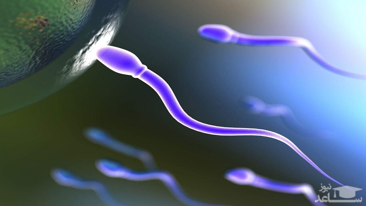 دلایل غلیظ و ژله ای شدن اسپرم