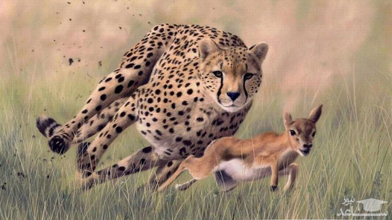 (عکس) خطای دید جالب در حیات وحش