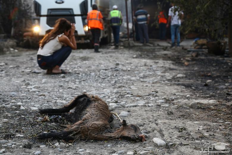 آتش سوزی در جنگل های آنتالیا