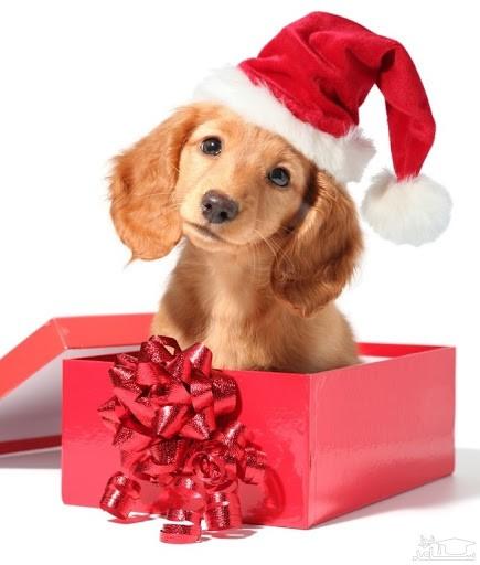 سگ هدیه